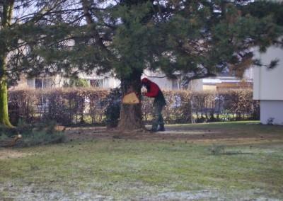 Baumfällen Aesch
