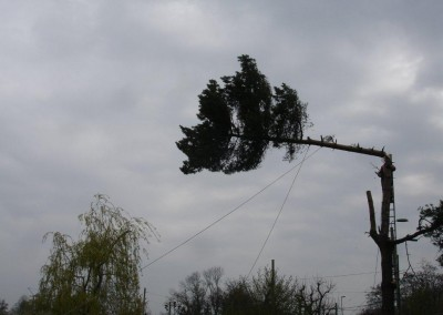 Baumfällen Birsfelden