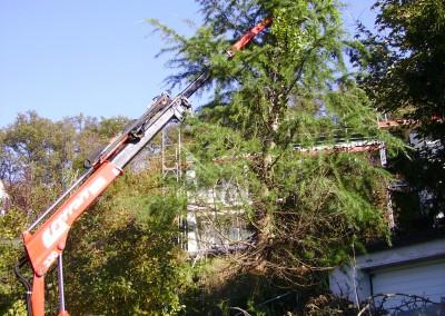 Baumfällen Arlesheim